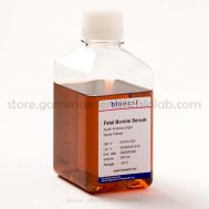 Fetal Bovine Serum (South America) – 500 mL – S1810-500